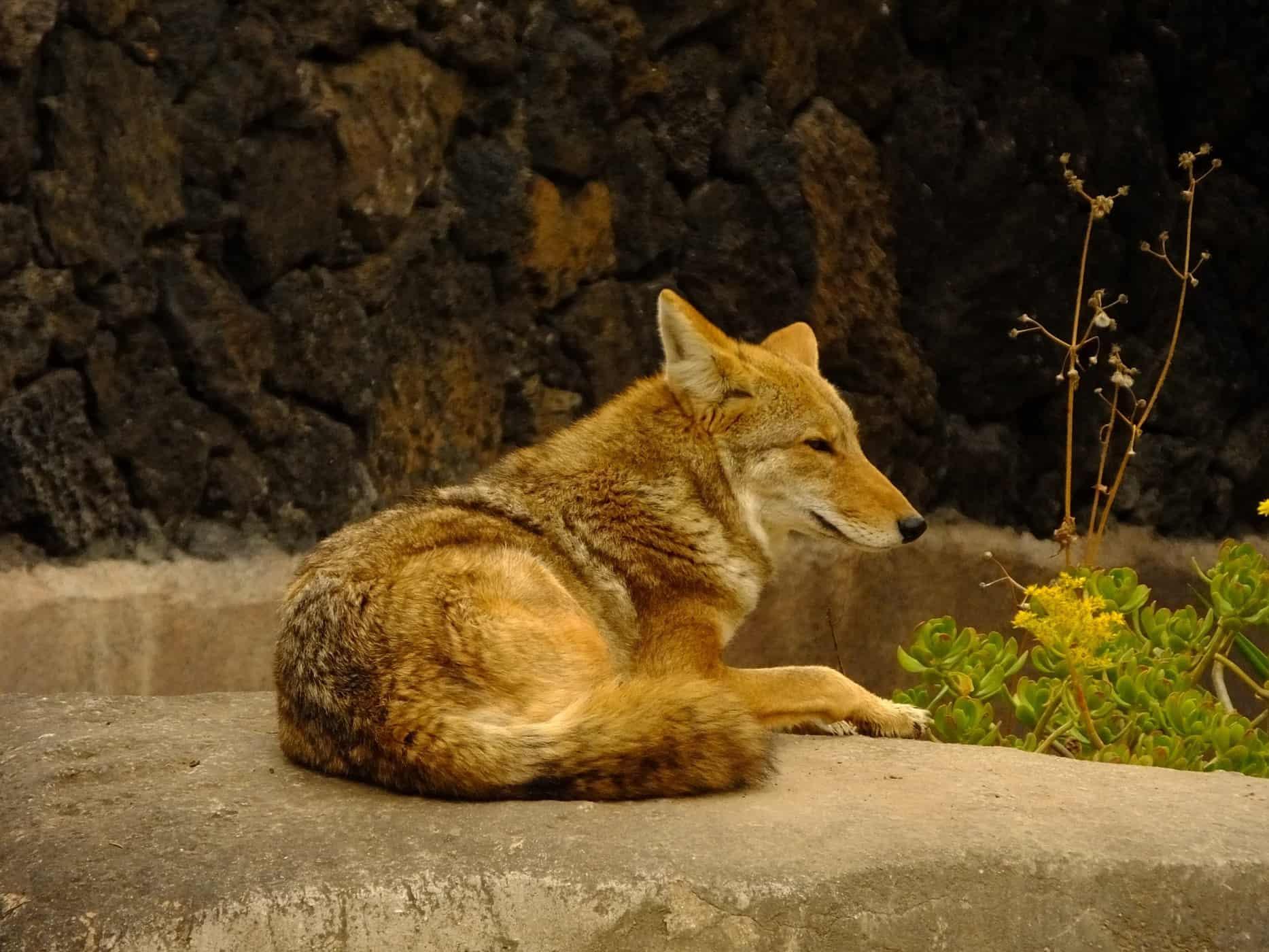 ambiente del coyote