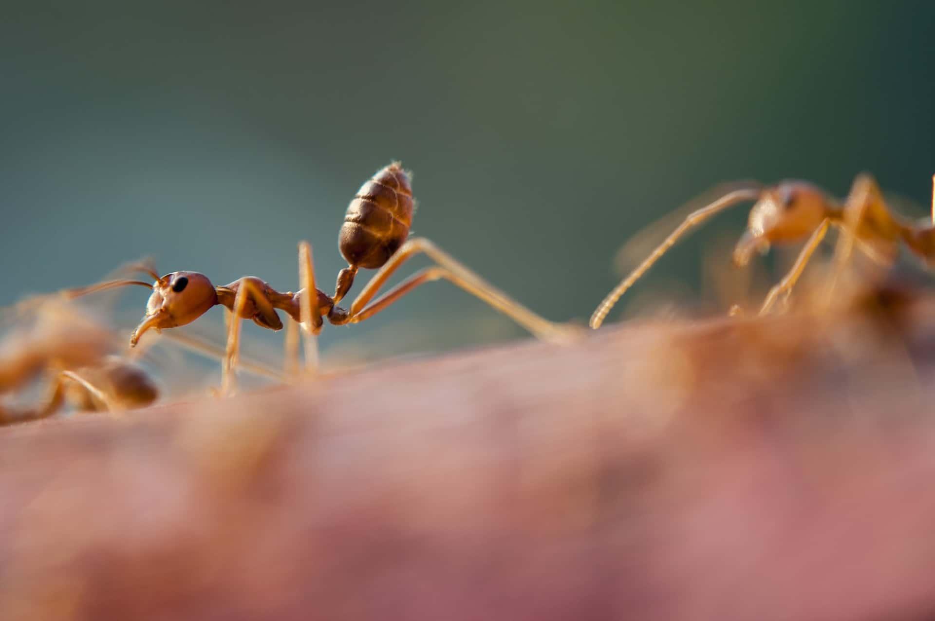 Vita delle formiche