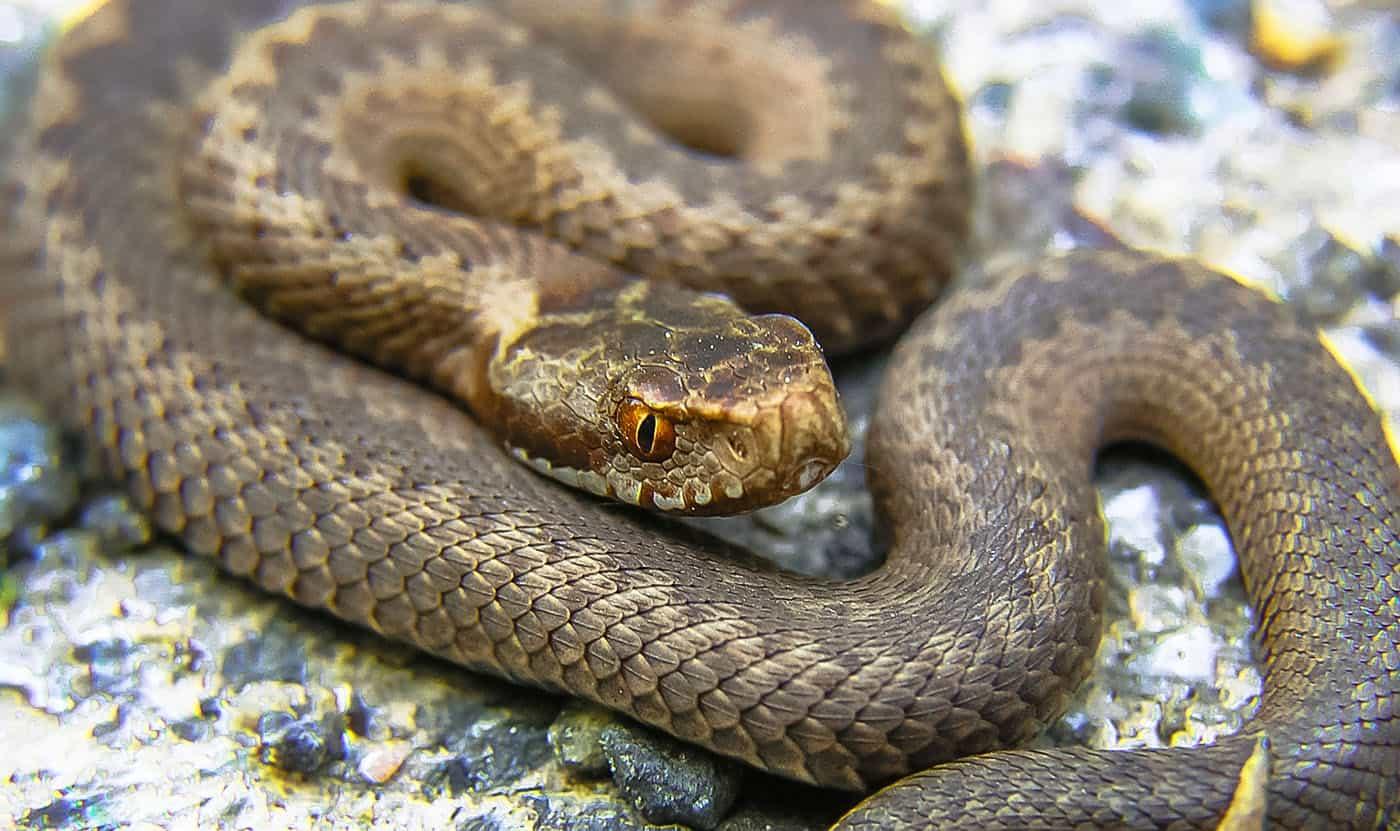 Come difendersi dai serpenti