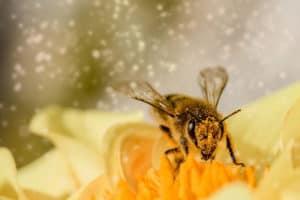 Differenza tra vespa e ape